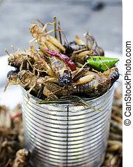 locust - a tin of locust appetizers