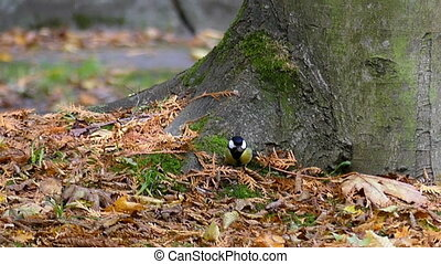 A tiny tomtit walks under a tree and takes off in a park in...