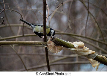 titmouse on a tree in winter on a branch
