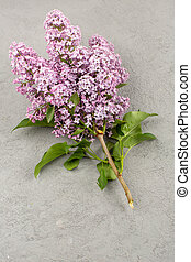 a top view flowers beautiful purple isolated on the grey background