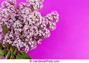 a top view flowers purple beautiful isolated on the purple background