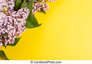 a top view flowers purple beautiful on the yellow background