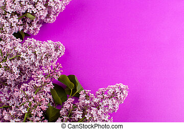 a top view flowers purple designed beautiful on the pink background