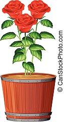 a, topf, von, rose, pflanze
