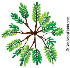 a, topview, von, a, farn, pflanze