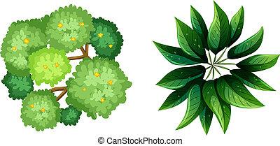 a, topview, von, a, pflanze