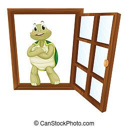 a tortoise in window