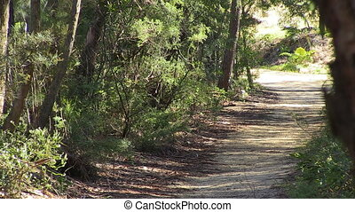 A trail inside woods - A steady shot of a trail on woods...