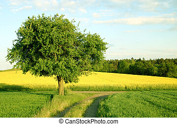 tree - a tree, a yellow field and a path
