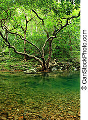 a tree and water in jungle