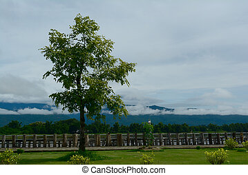 a tree at Khong river side  with clouds  in rainny season
