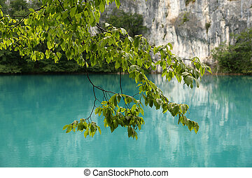 A tree branch with leaves on a background of blue water of a mountain lake
