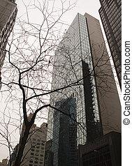 A Tree Grows in Manhattan