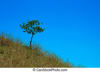 A tree grows in the grass on the hill against the blue sky