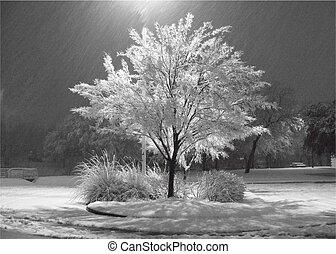A Tree illuminated in the Snow