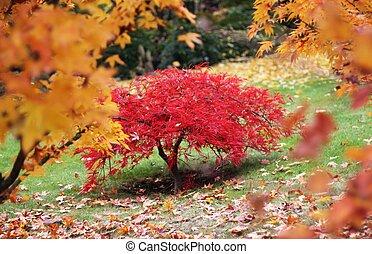 A tree in a autumn japanese garden