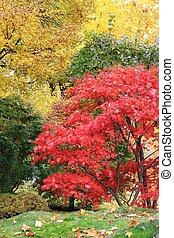 A tree in a japanese garden