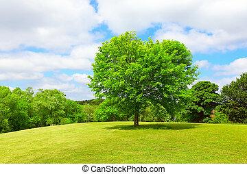 A tree in a meadow