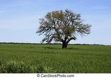 A tree in a wheat field