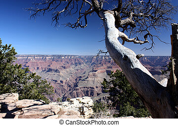 A tree in Grand Canyon