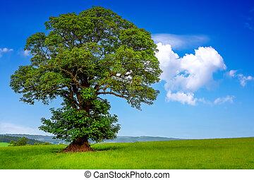 A tree in the field