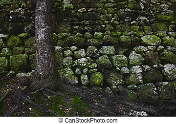 A tree in the forest against an old rural stone wall with green moss