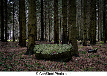 A tree log on the ground in a beautiful dark pine forest. Picture from Scania, Sweden
