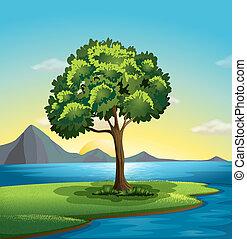 A tree near the ocean