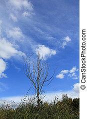 A tree on blue sky background