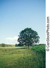 Tree on summer meadow