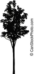 a tree silhouette vector
