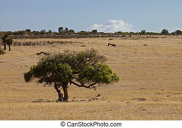 Australian landscape in sunny day