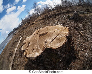 a tree stump in the forest