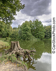 A tree stump on the shore of a small lake