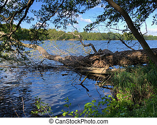 a tree swept by the storm lies on the shore of a lake