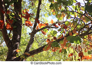 A tree with colorful leaves in autumn