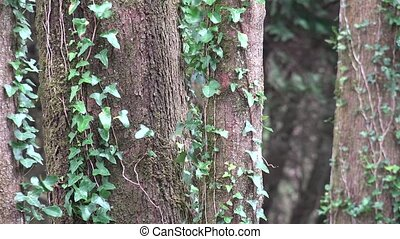 A Tree With Leafy Vines