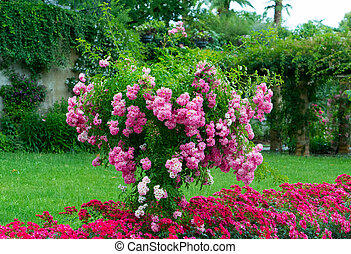 A tree with pink flowers in the garden.