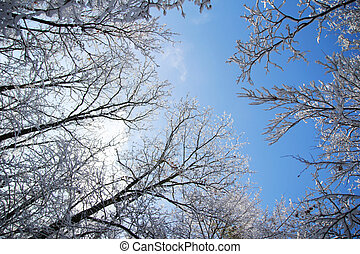 trees in the snow in beautiful winter forest