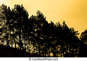 A Trees silhouette on nature at sunset park.