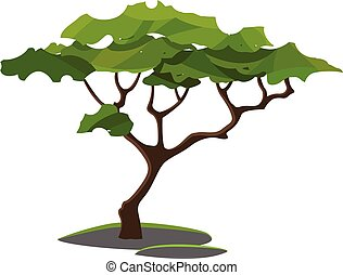 A tree/Woody perennial plant vector or color illustration