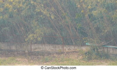 A tropical downpour in Thailand. Rain by Wall - A tropical...