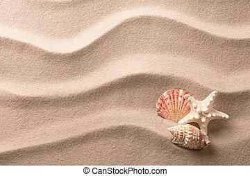 A tropical starfish and sea shells laying in the beach sand