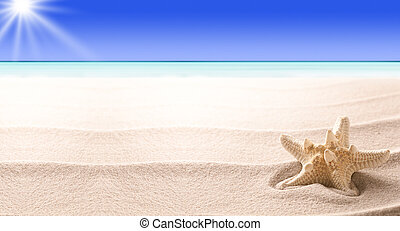 A tropical starfish laying in the beach sand