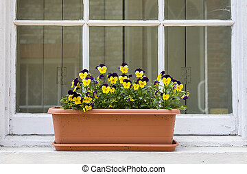 Pansies on a Window Sill