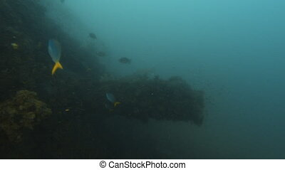A tube like part of a sunken ship covered by reefs - Going...