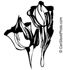 a tulip - a sketch in black and white tulip