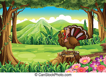 A turkey at the forest