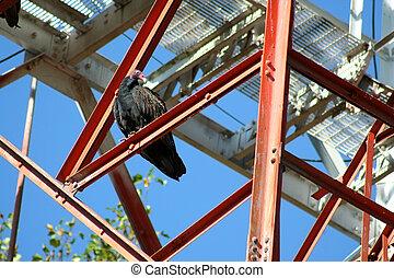 Turkey Buzzard on a tower