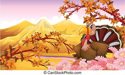 A turkey near the mountain